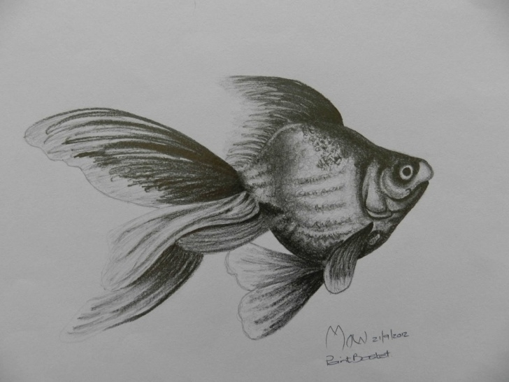 Fine Fish Pencil Sketch Step by Step Fish Pencil Drawing At Paintingvalley | Explore Collection Of Pics