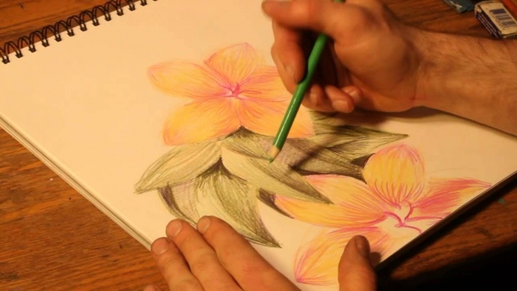 Fine Flower Colour Pencil Drawing Easy How To Draw Flowers With Colored Pencils Picture