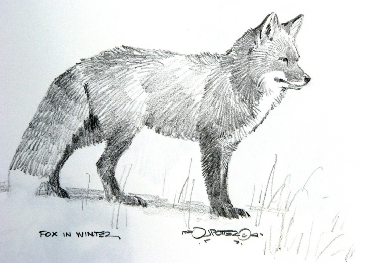"Fine Fox Pencil Sketch Courses Draeing Grizzly Cubs | 17X14"" Colored Pencil On Bristol Board 