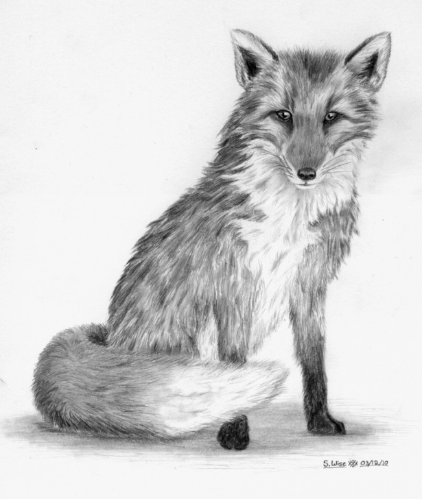 Fine Fox Pencil Sketch Courses Pin By Ellen Bounds On Graphite Pencil Drawings Of Fox In 2019 Pic