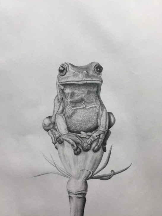 Fine Frog Pencil Sketch Techniques 60 Frog On A Flower Sketch. Orginal Art, Pencil Drawing By Elena Photo