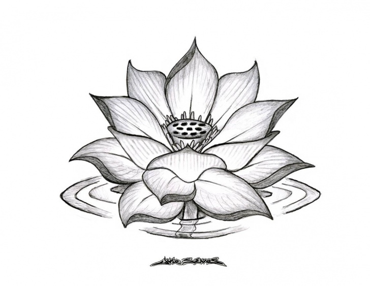 Lotus Flower Pencil Drawing