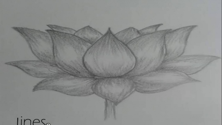 Fine Lotus Pencil Drawing Ideas How To Draw Lotus Flower Picture