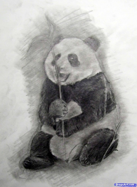 Fine Panda Drawing Realistic for Beginners How To Draw A Realistic Panda, Draw Real Panda, Step By Step Pics