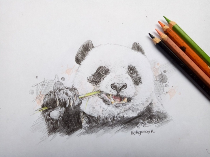 Fine Panda Pencil Drawing Tutorial Panda Pencil Drawing At Paintingvalley | Explore Collection Of Pic
