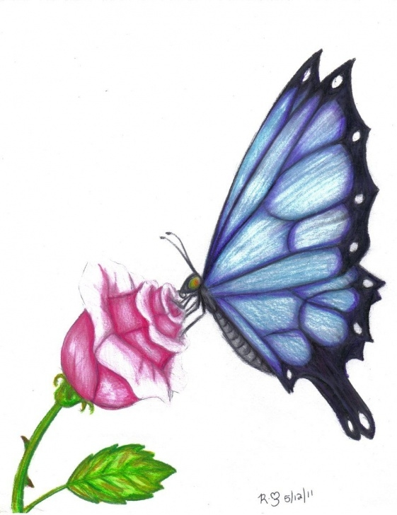 Fine Pencil Drawings Of Flowers And Butterflies With Colours Techniques for Beginners Butterfly Drawings In Color | Butterfly Rose By Evolra Traditional Pics
