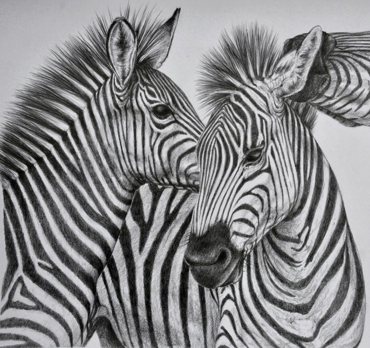 Fine Pencil Sketches Of Wild Animals Free Wild Animals Sketch At Paintingvalley | Explore Collection Of Picture