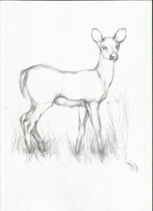 Pencil Sketches Of Wild Animals