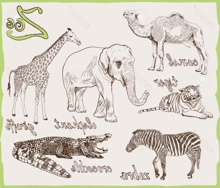 Fine Pencil Sketches Of Wild Animals Tutorials Wild Animals Sketch At Paintingvalley | Explore Collection Of Pictures