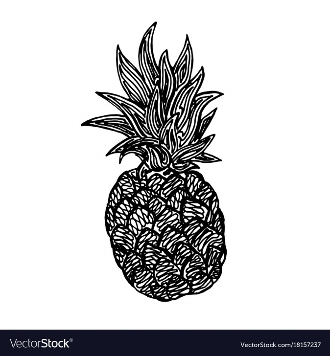 Fine Pineapple Pencil Drawing Techniques for Beginners Pineapple Pencil Sketch Image