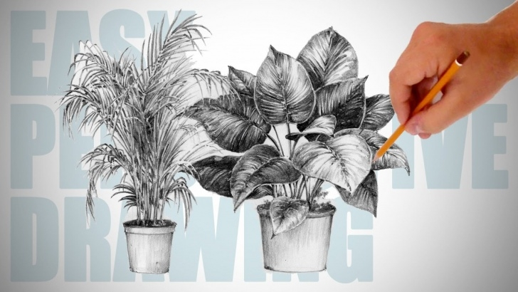 Fine Plant Pencil Drawing Courses How To Draw Plants - Easy Perspective Drawing 19 Pics