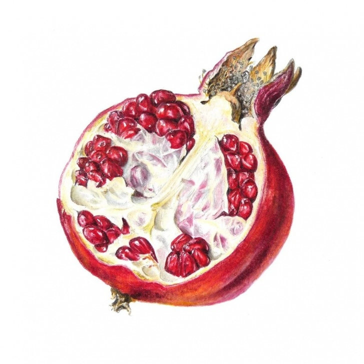 Fine Pomegranate Pencil Drawing Courses Pomegranate | Coloured Pencil Drawing Of A Pomegranate (Puni… | Flickr Image
