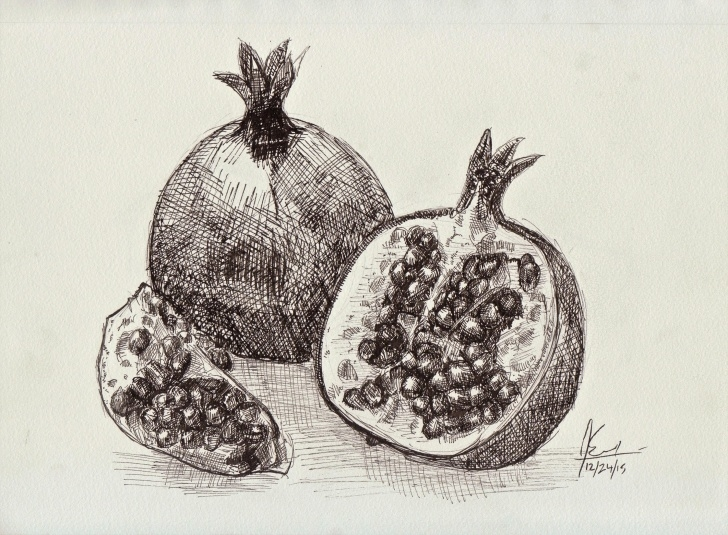 Fine Pomegranate Pencil Drawing Step by Step Pen Drawing Of Pomegranates. | Art By Noah Snoke | Pomegranate Image