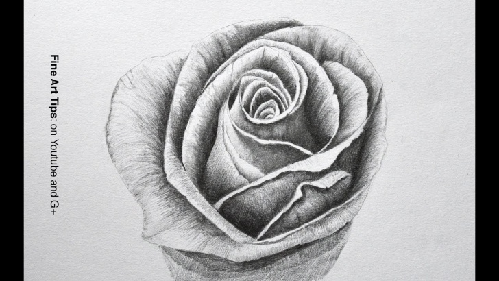 Fine Rose Flower Pencil Drawing Techniques Drawing Flowers: How To Draw A Rose With Pencil - Fine Art-Tips. Photo