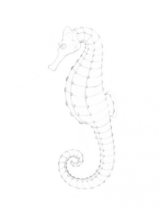 Fine Seahorse Pencil Drawing for Beginners How To Draw A Seahorse With Black And Grey Ink Liners Image