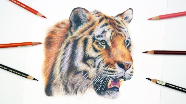 Fine Tiger Colored Pencil Drawing Tutorials How To Draw A Realistic Tiger | Colored Pencil Tutorial Pic