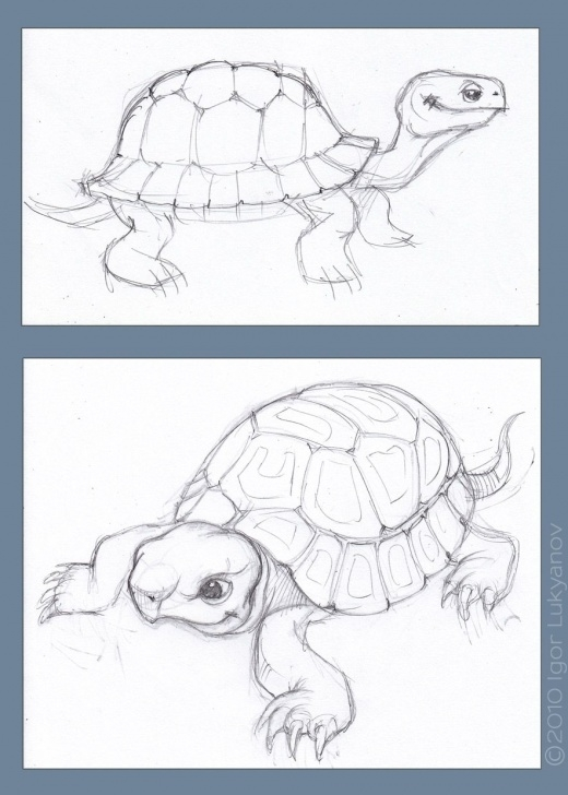 Fine Turtle Pencil Drawing Courses Tortoise-Sketch-Drawing | Art - Sketches - Freehand | Tortoise Images