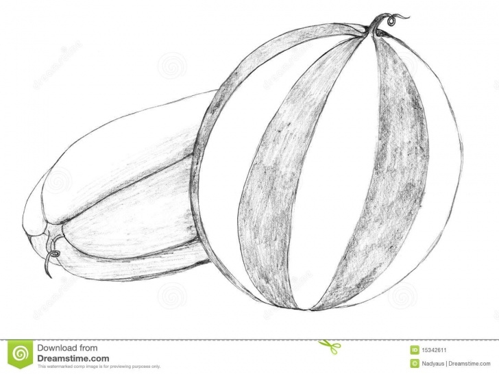 Fine Watermelon Pencil Drawing Free Watermelon Pencil Drawing Stock Illustration. Illustration Of Images
