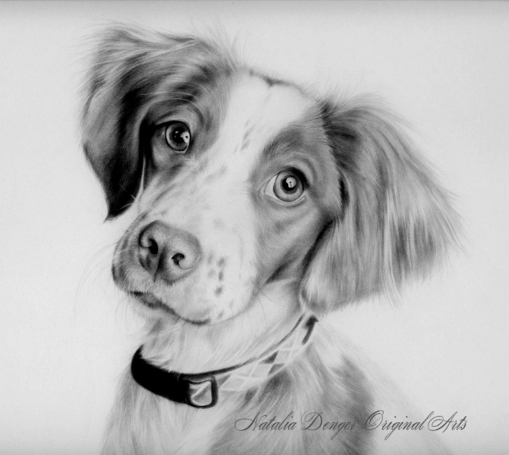 Good Animal Drawing Pencil Courses Easy Animal Drawings In Pencil | Barong Wallpapers Image