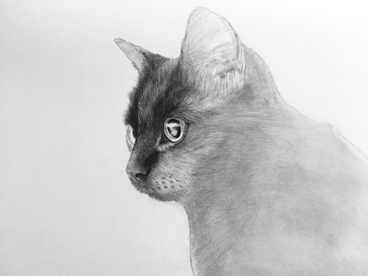 Good Black Cat Pencil Drawing Ideas Pencil Drawing - Black Cat On Behance Photo