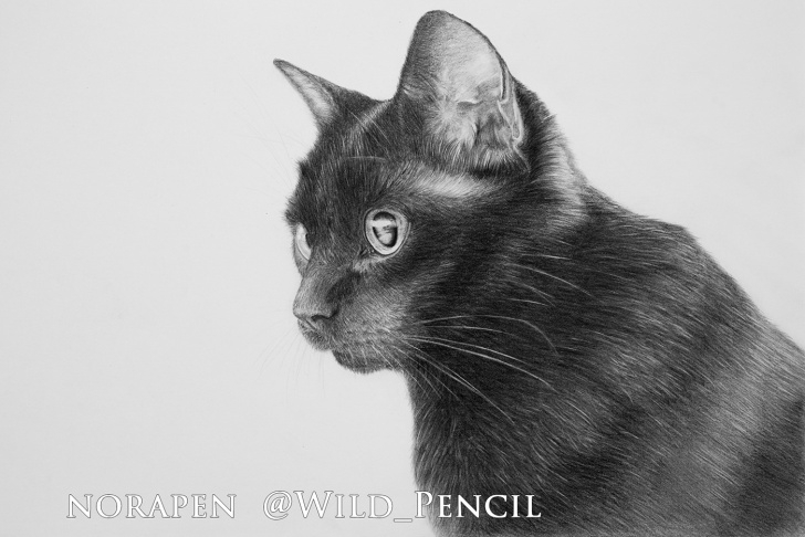 Good Black Cat Pencil Drawing Techniques for Beginners Pencil Drawing - Black Cat On Behance Pics