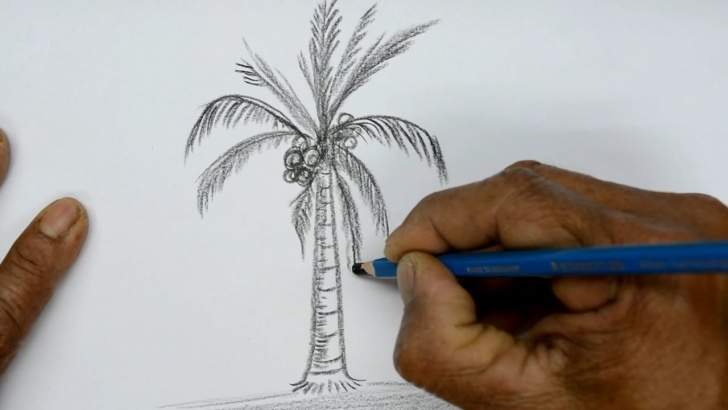 Good Coconut Tree Pencil Drawing Tutorial How To Draw A Coconut Tree Pic