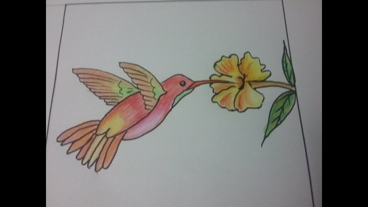 Good Colour Pencil Shading Drawing Courses How To Draw Humming Bird,bird Drawing For Kids, Colour Pencil Shading Of  Humming Bird Image