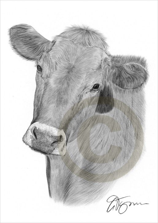 Good Cow Pencil Art Courses Cow Pencil Drawing At Paintingvalley | Explore Collection Of Cow Images