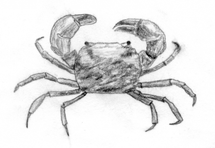Good Crab Pencil Drawing Lessons File:mud Crab - Wikipedia Pictures