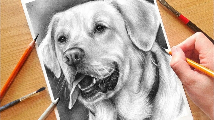 Good Dog Drawings In Pencil Step By Step Tutorial How To Draw A Dog! Realistic Drawing Tutorial Step By Step | Drawing With  Charcoal Image