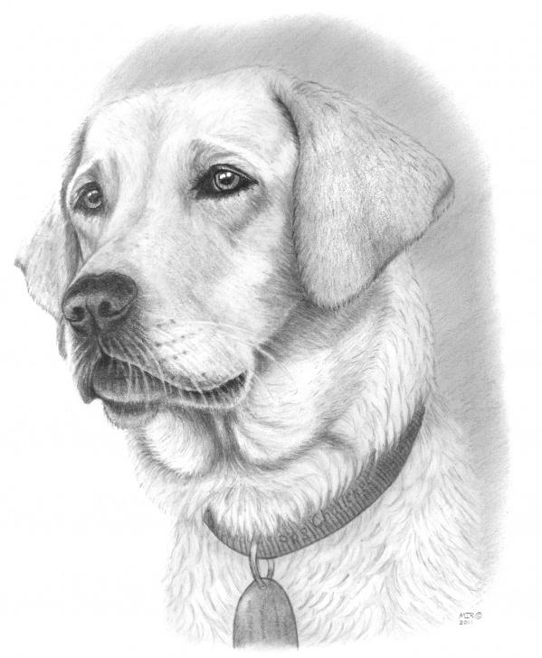 Good Dog Pencil Art Techniques Dog Pencil Drawing | - Clip Art Library Pics