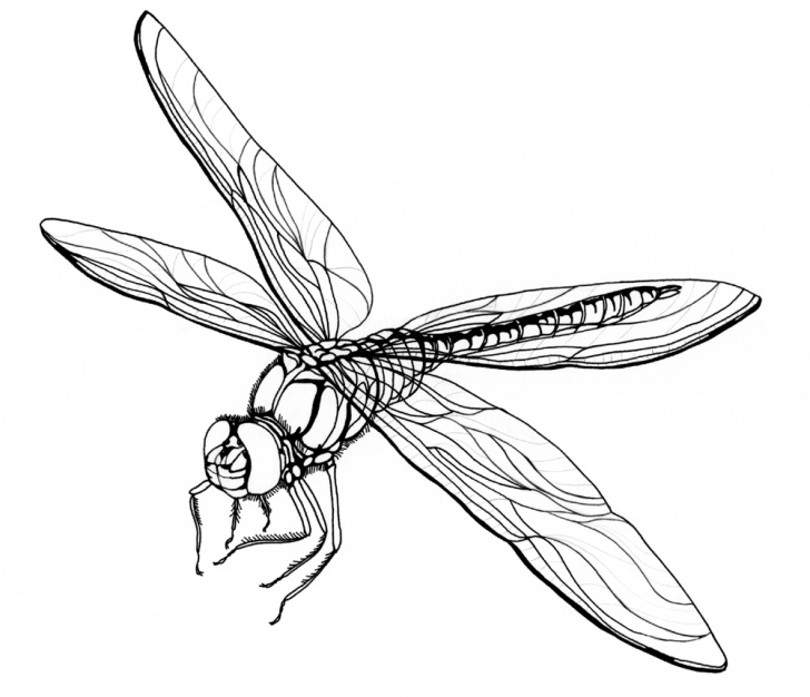 Good Dragonfly Pencil Drawing Lessons Free Dragonfly Drawings, Download Free Clip Art, Free Clip Art On Photo