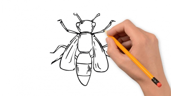 Good Drawing Insects Pencil Ideas Insects Animals Pencil To Draw Step By Step Photo