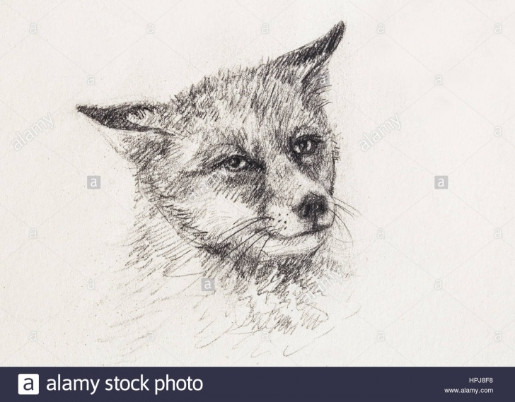 Good Drawings To Copy With Pencil Techniques for Beginners Fox Portrait, Pencil Drawing On Paper. Copy Space Stock Photo Pictures