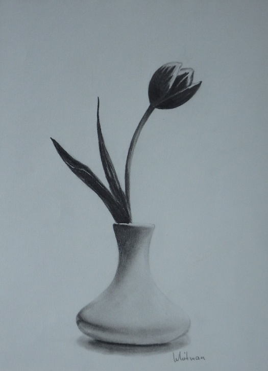 Good Flower Vase Pencil Shading Step by Step Tulip In A Vase, Still Life Sketch. Original Art, Graphite Pencil Pic