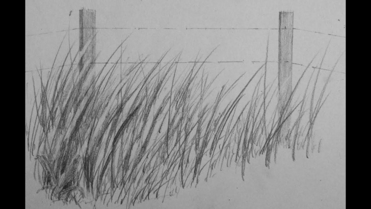 Grass Pencil Drawing