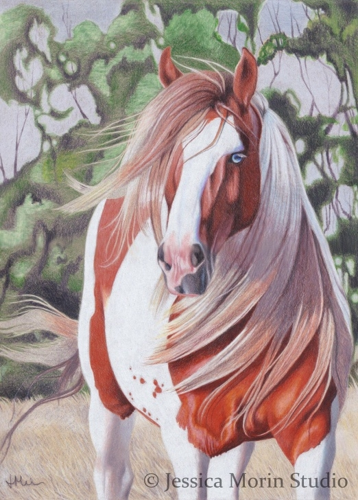 Good Horse Drawing Colored Pencil for Beginners Jessica Morin Colored Pencil Horse Drawing. Paint Horse With Blue Picture