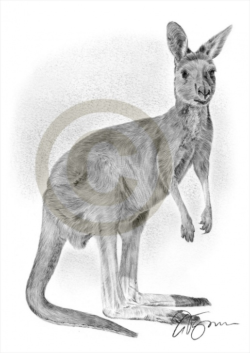 Good Kangaroo Pencil Drawing Easy Kangaroo Pencil Sketch And Kangaroo Pencil Drawing Print Animal Art Image