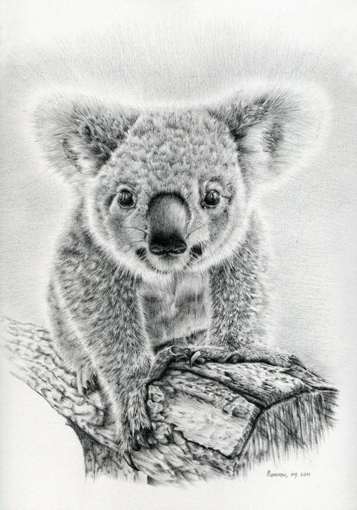 Good Koala Pencil Drawing Ideas Pin By Karen Young On Koalas | Animal Drawings, Pencil Drawings Of Images