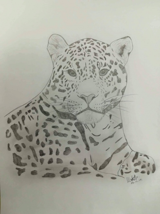 Good Leopard Pencil Drawing Easy Leopard Pencil Drawing Pics