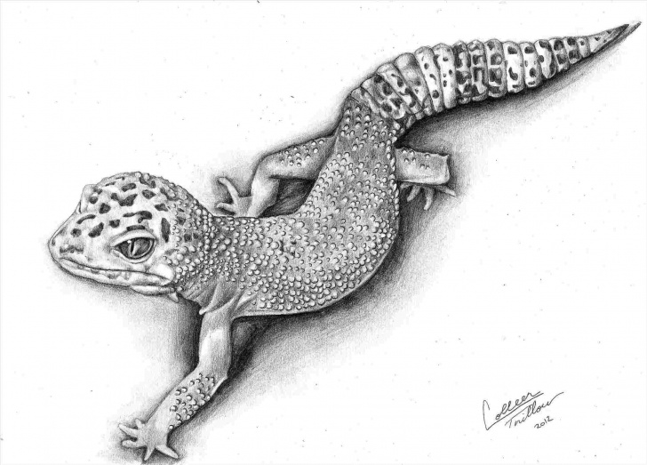 Good Lizard Pencil Drawing Ideas Necked-Using-Rhpinterestcom-Detailed-Pencil-Drawings-Of-Lizards-Line Pics