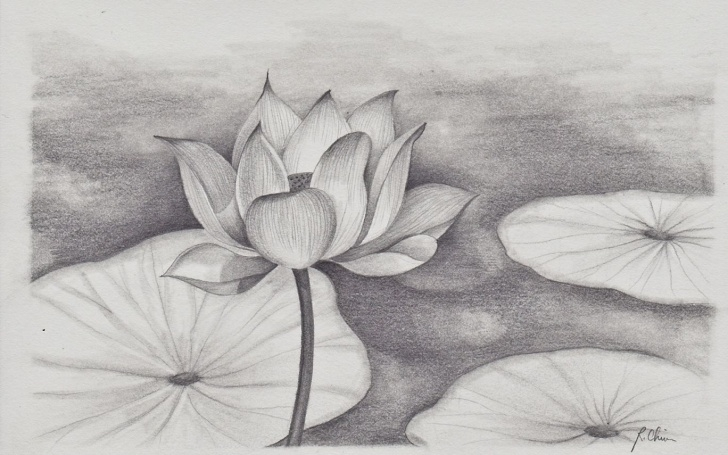 Good Lotus Pencil Drawing Techniques Lotus Flower Pencil Sketch At Paintingvalley | Explore Images