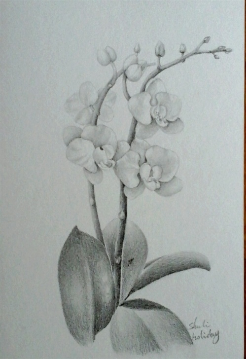 Good Orchid Pencil Drawing Techniques Orchid Pencil Drawing At Paintingvalley | Explore Collection Of Pics