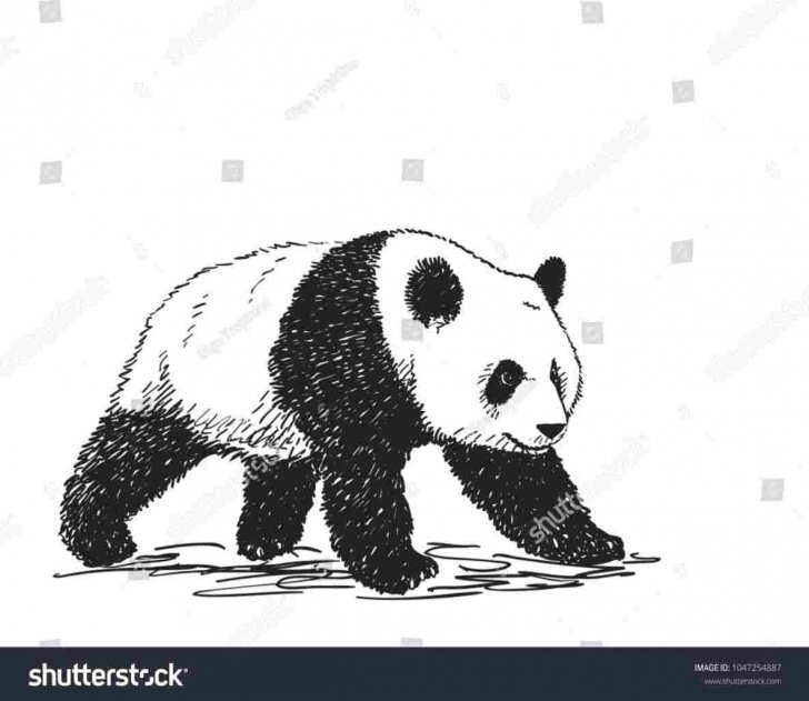 Good Panda Drawing Realistic Tutorial Realistic Panda Bear Drawing | Drawing Work Pictures