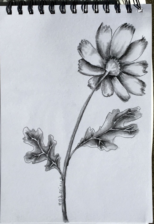 "Good Pencil Drawings Flowers Art Ideas Flower Artist: Ybboricua Description: 10"" X8"" Original Pencil Art Pictures"