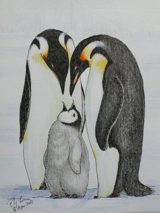 Good Penguin Drawings In Pencil Courses Emperor Penguin Color Pencil Drawing 1 | Poyee_Lam0321 | Flickr Pic