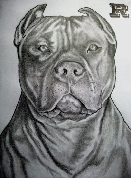 Good Pitbull Drawings In Pencil Tutorial Pitbull Drawing Ideas/ Insperation | Drawing | Pitbull Drawing, Bull Pic