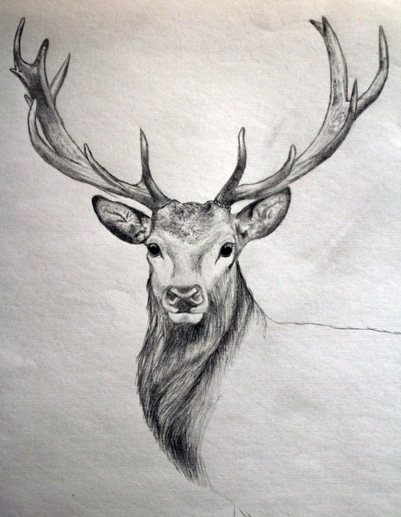 Good Reindeer Pencil Drawing Step by Step Drawing After Hunting … | Art And Stuff | Deer … Picture