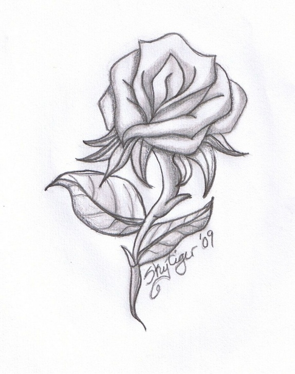 Good Rose Pencil Art Step by Step Cool Pics To Draw | Rose Pencil Drawing By Skytiger Traditional Art Picture