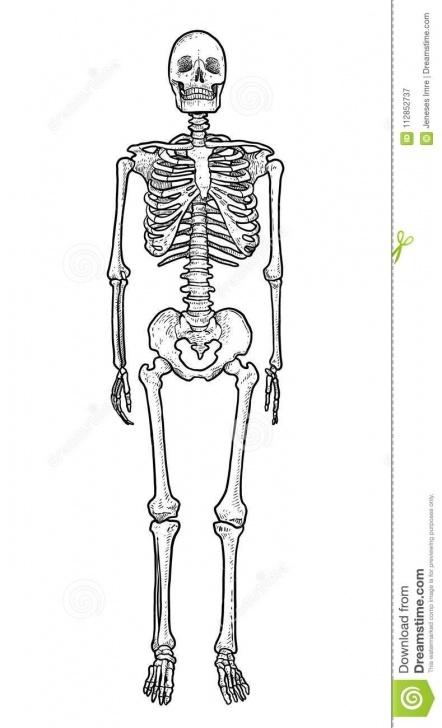 Good Skeleton Pencil Drawing Easy Human Skeleton Illustration, Drawing, Engraving, Ink, Line Art Pics